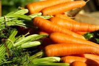 Od zaraz oferta sezonowej pracy w Norwegii bez języka zbiory warzyw 2021 w Hoppestad