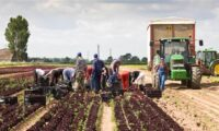 Dla par Norwegia praca sezonowa w rolnictwie bez języka na farmie Moss 2021