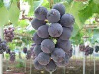 Zbiory winogron praca w Norwegii od zaraz bez języka Lillehammer 2021